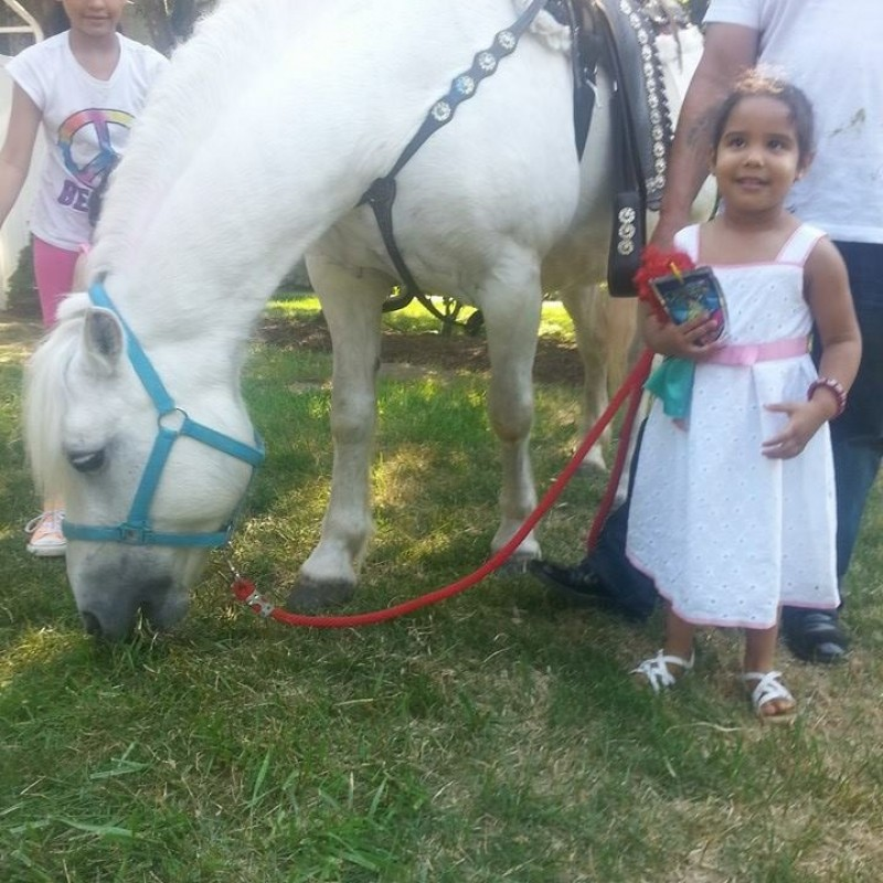 Ponies Will Travel in Long Island, NY | Free Quote | Kidlistings