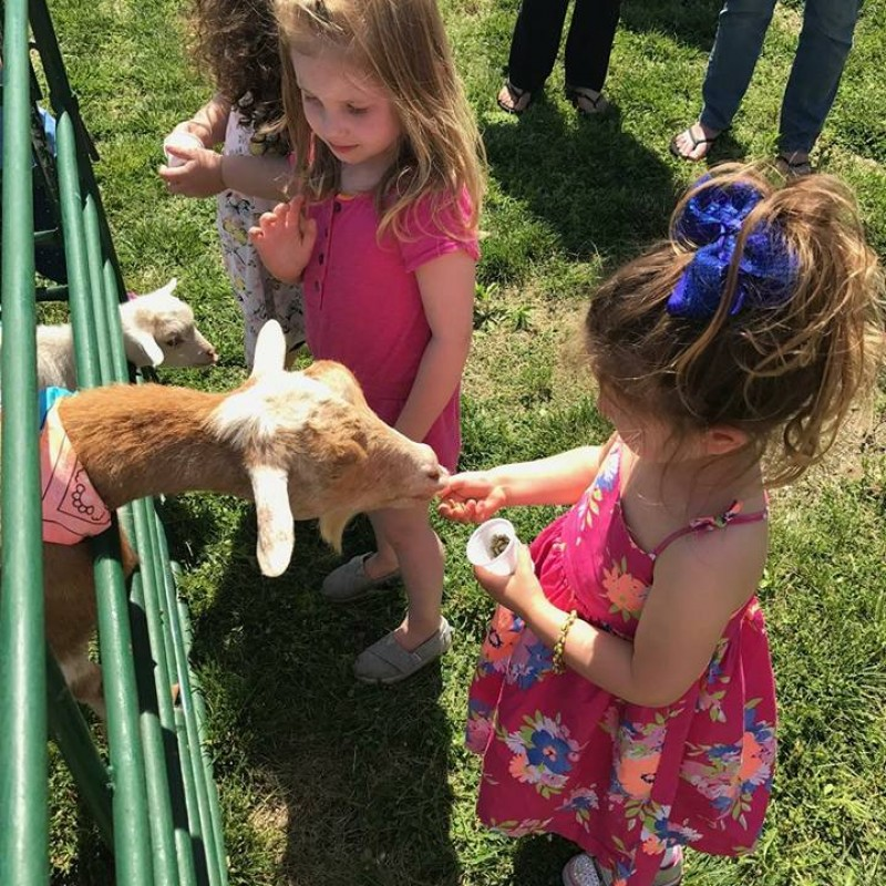 Lollipop Pony Parties in Islip, NY | Free Quote | Kidlistings