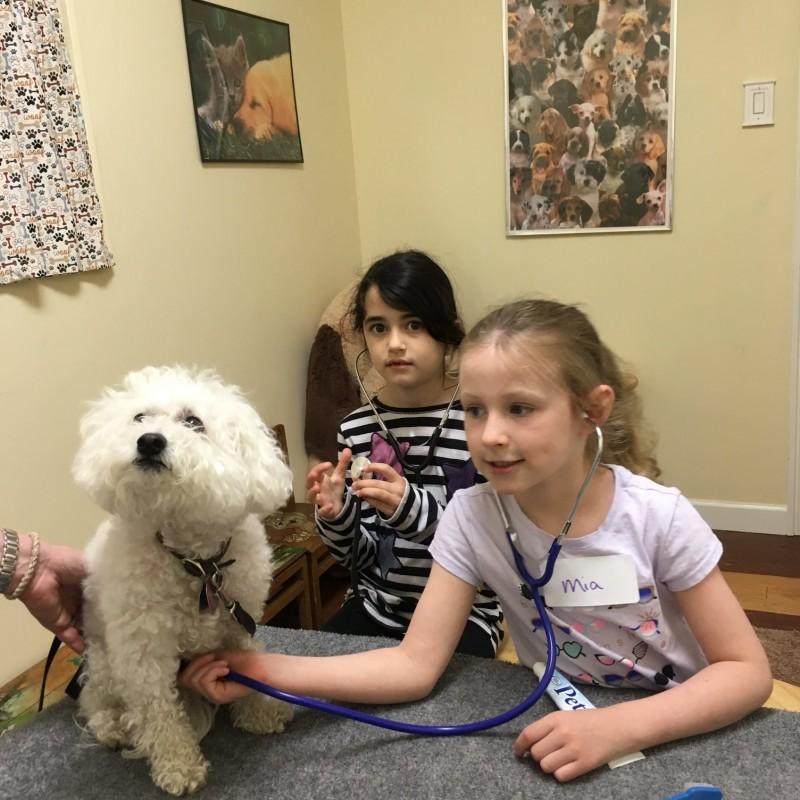 DogAbility Center in Syosset, NY | Free Quote | Kidlistings